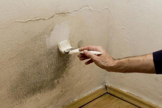 muffa nelle pareti
